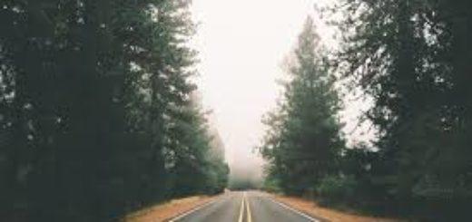 Экспертиза дорожных условий